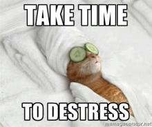 Photo of a cat getting a spa treatment, the caption reads: Take time to destress